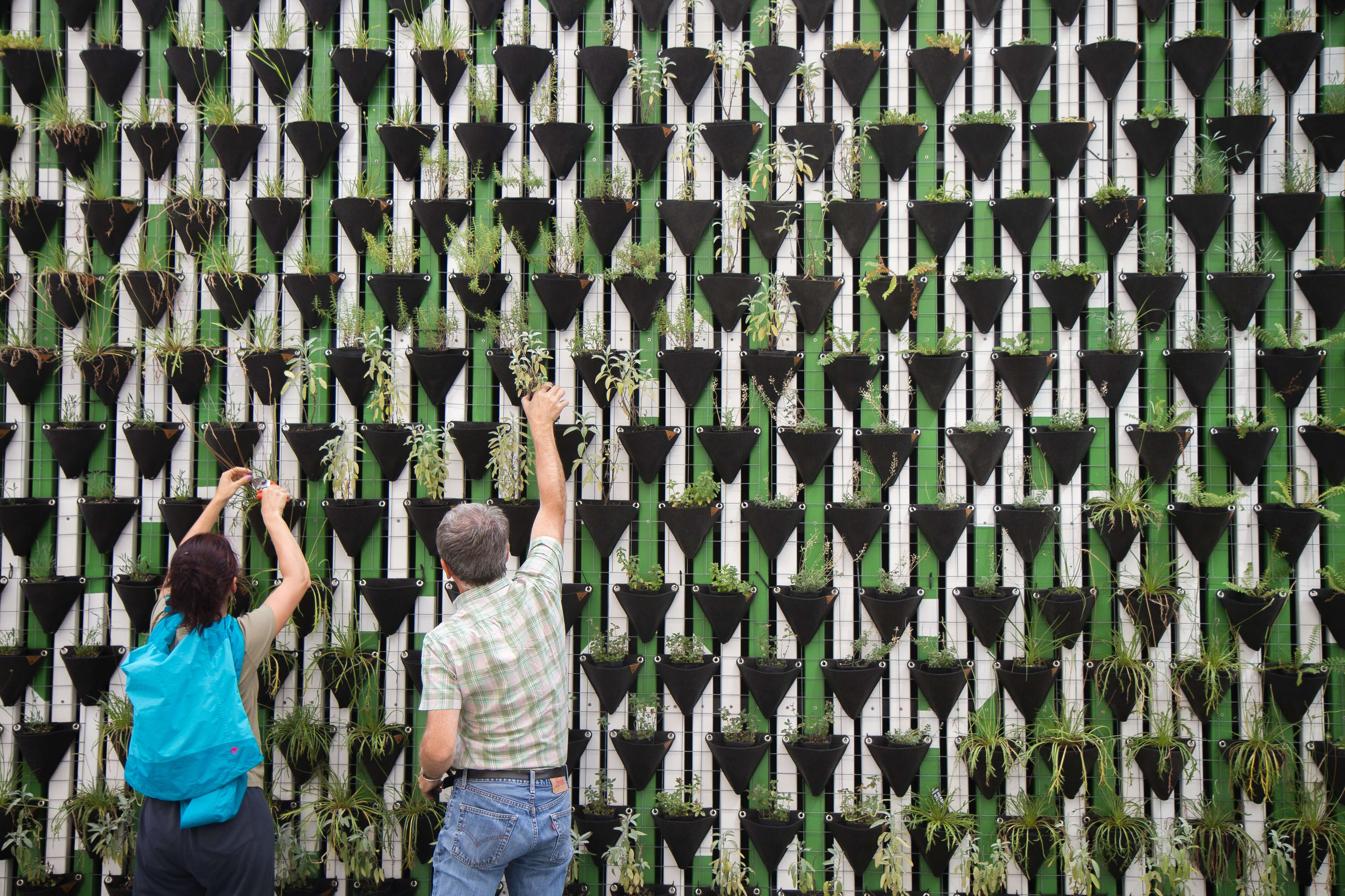 Planting a green wall together